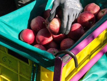 Auf Besuch beim Obstbau Giner in Thaur