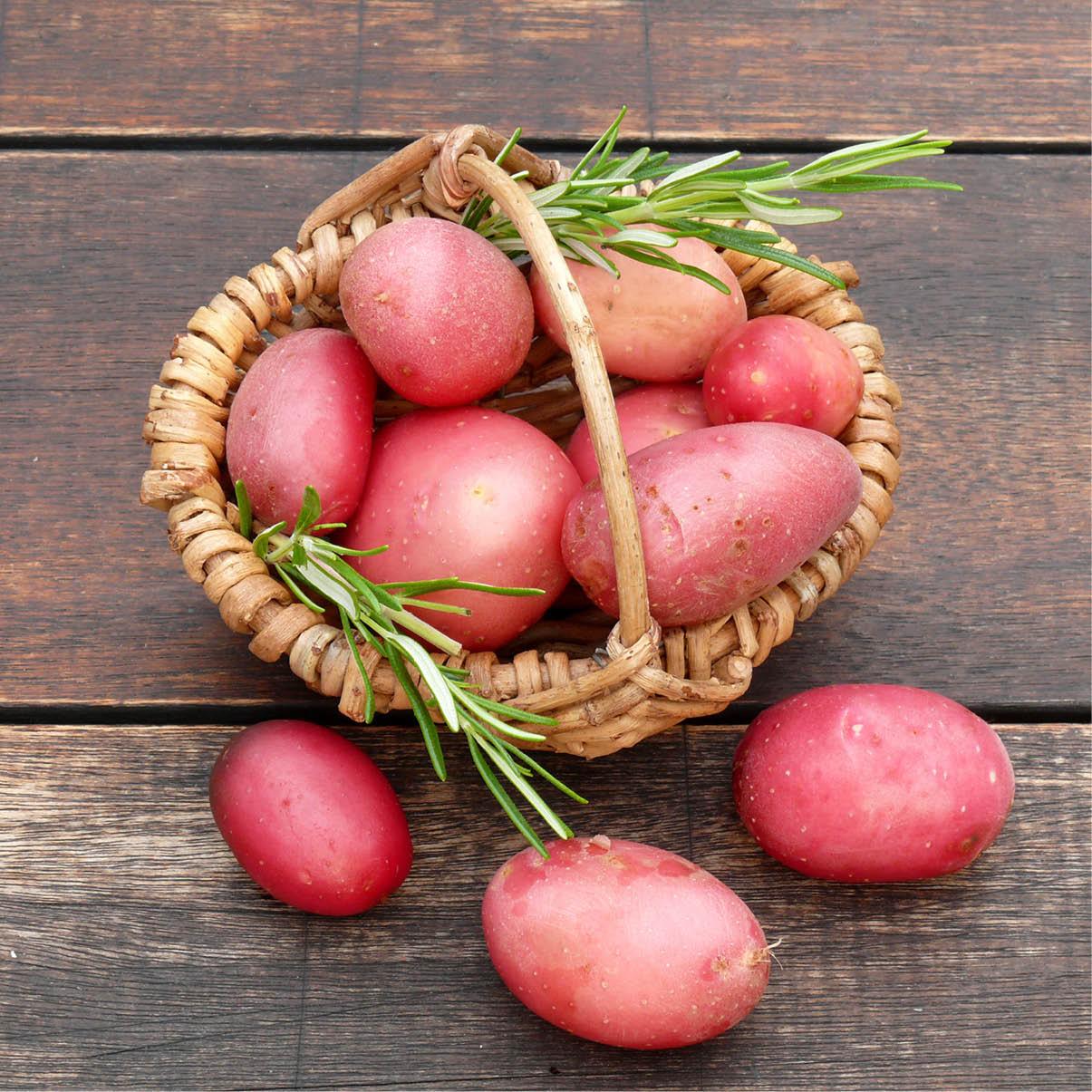 kartoffel-rotschalig